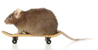 אסי קליין מדביר עכברים מקצועי