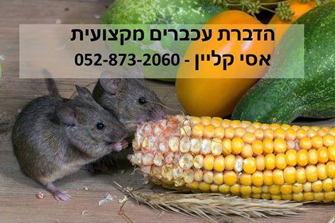הדברת עכברים מקצועית אסי קליין