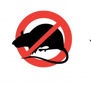 עכברים - דרכי טיפול
